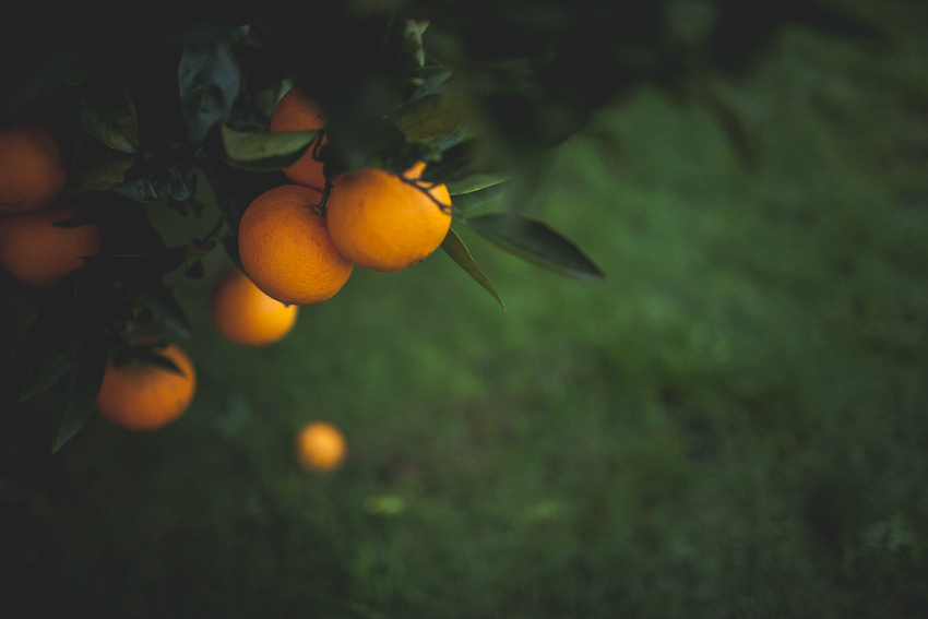 WYWH-Our oranges are good this year - my backyard - Frankston, Australia - Megan-Gardner-Wk25
