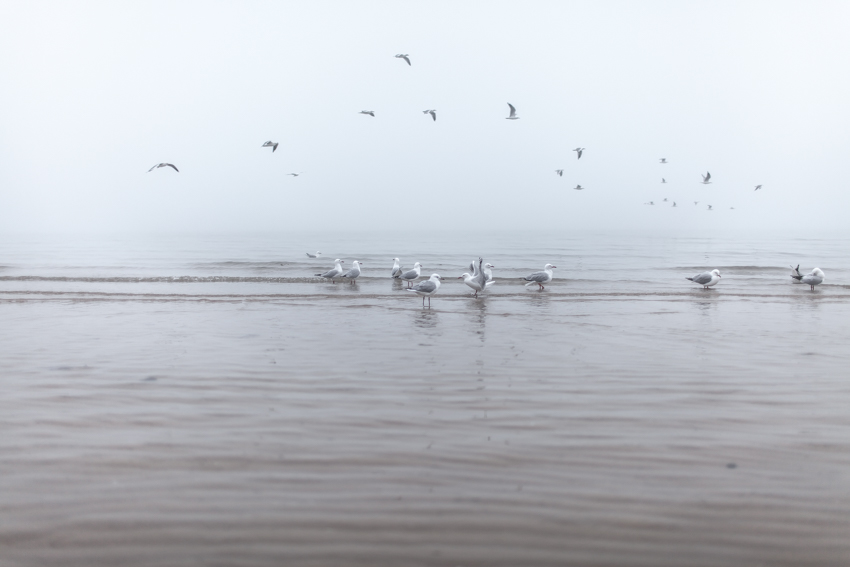 WYWH-freezing winter fog-Frankston Beach, Australia-Megan-Gardner-Wk28