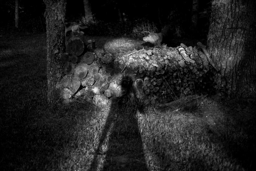 Amanda-ODonoughue-self-in-the-wood-North-Carolina-WYWH-WK-33