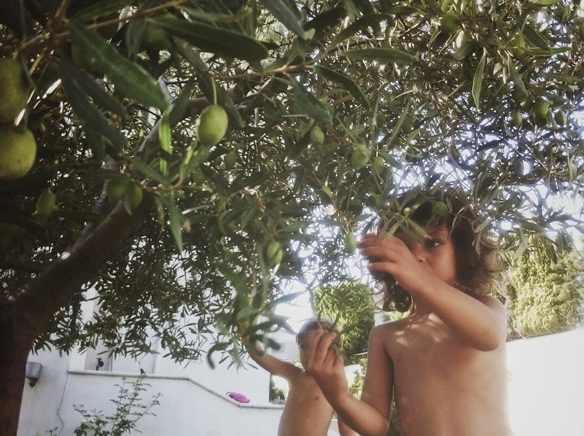 efipanagoula_wk31_thetree_thessaloniki