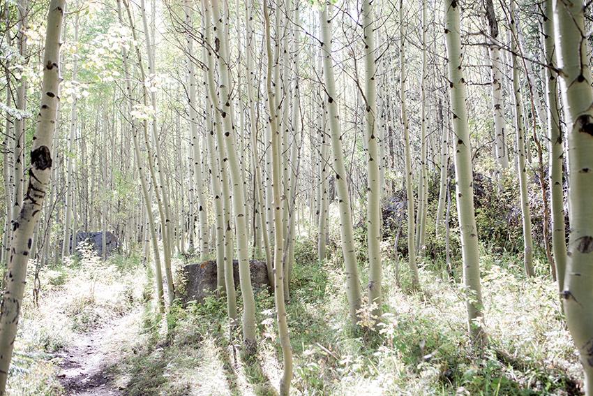 Week36-MeghanHof-InTheAspens-Vail-Colorado