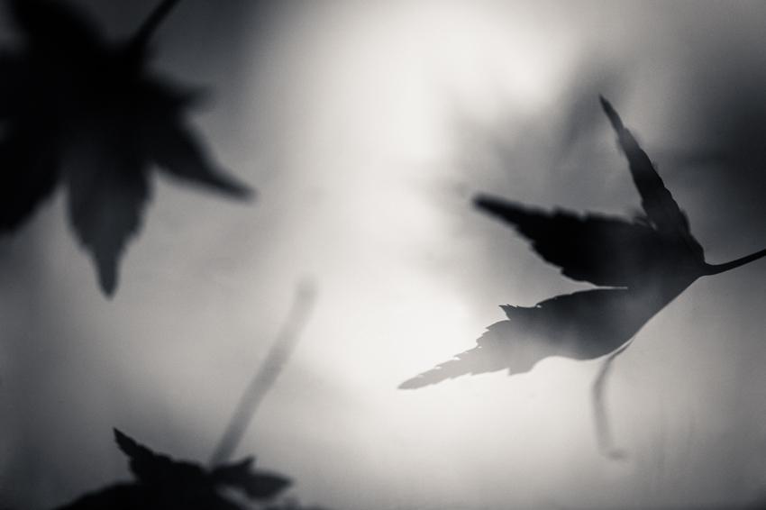 becky venteicher_free as a bird, Virginia_wk45