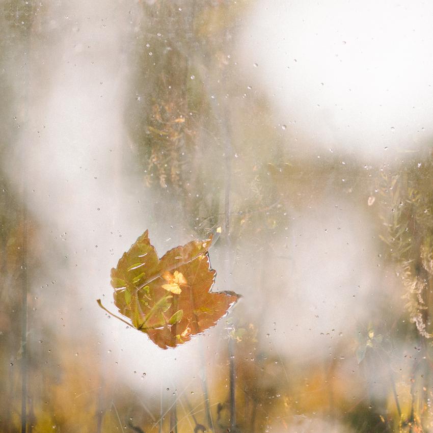 becky venteicher_the feeling of autumn, Virginia_wk44