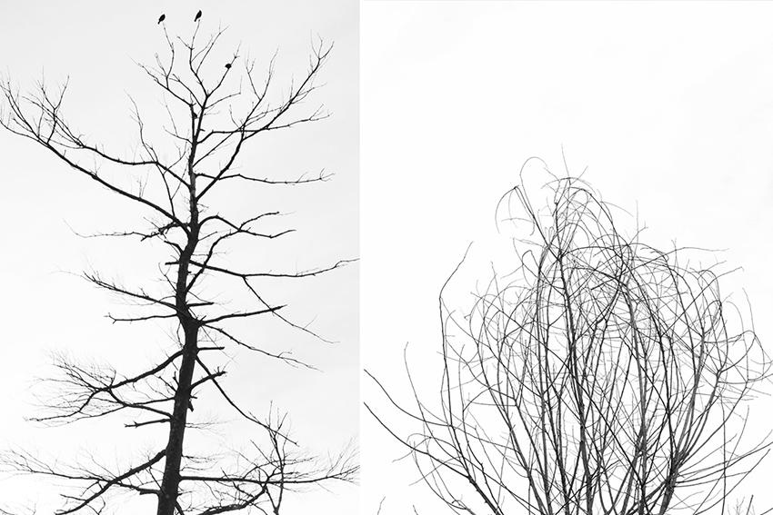 pamelajoye_wk44-lines-and-scribbles-massachusetts