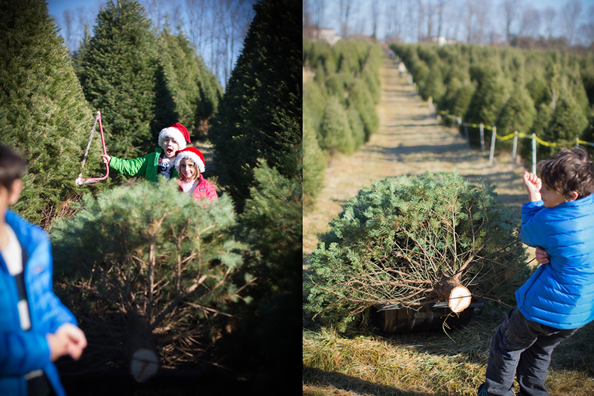 03-gingerwillard.takinghomethetree.virginia.wk49