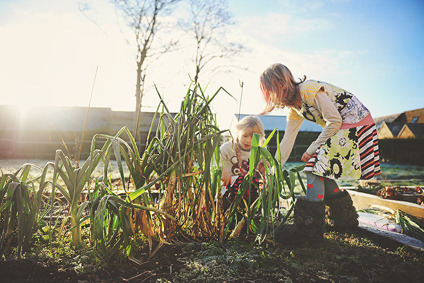 Kirsty-Larmour-Week1-frosty-gardening-near-Cambridge-England