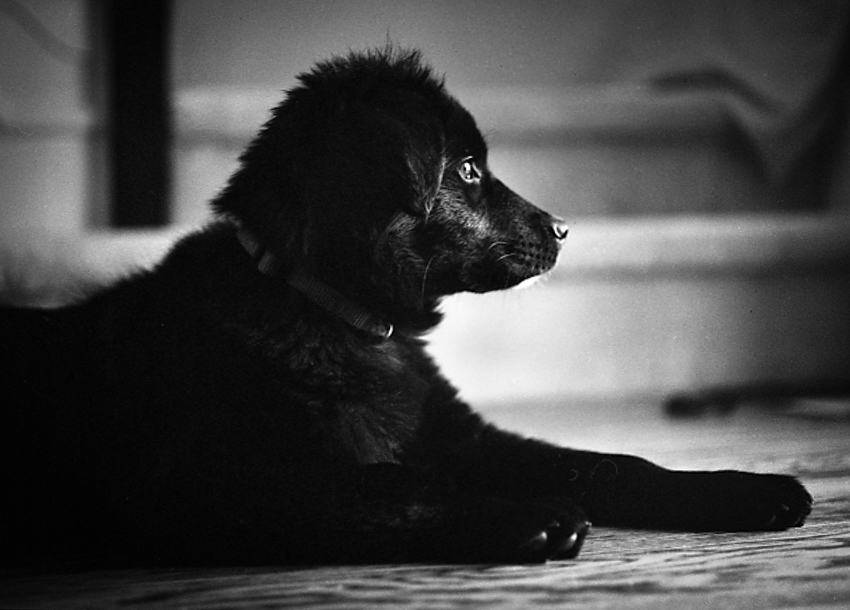 jenc_annie puppy_pennsylvania
