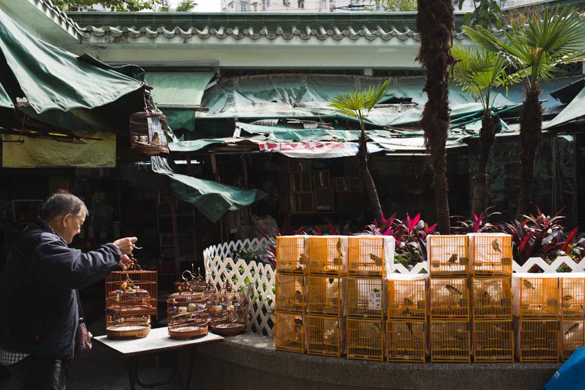 nicolaberry_Yuen Po Bird Garden_Hong Kong