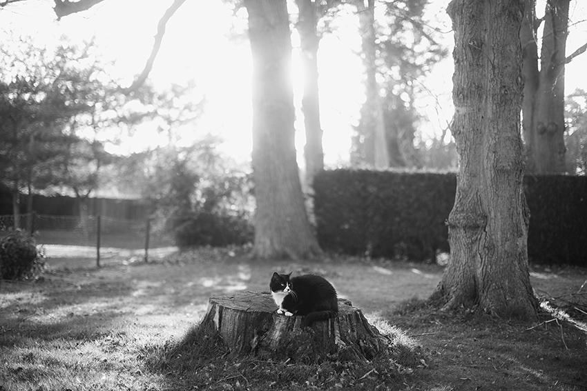 lililove-Clarence-England