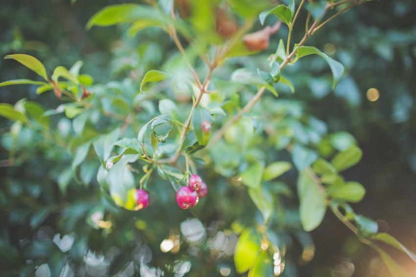 WYWH-a pop of colour in the backyard-Frankston-Australia-Megan-Gardner-Wk13