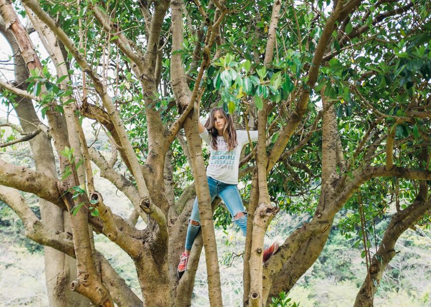 deb-schwedhelm-tree climber-zushi japan