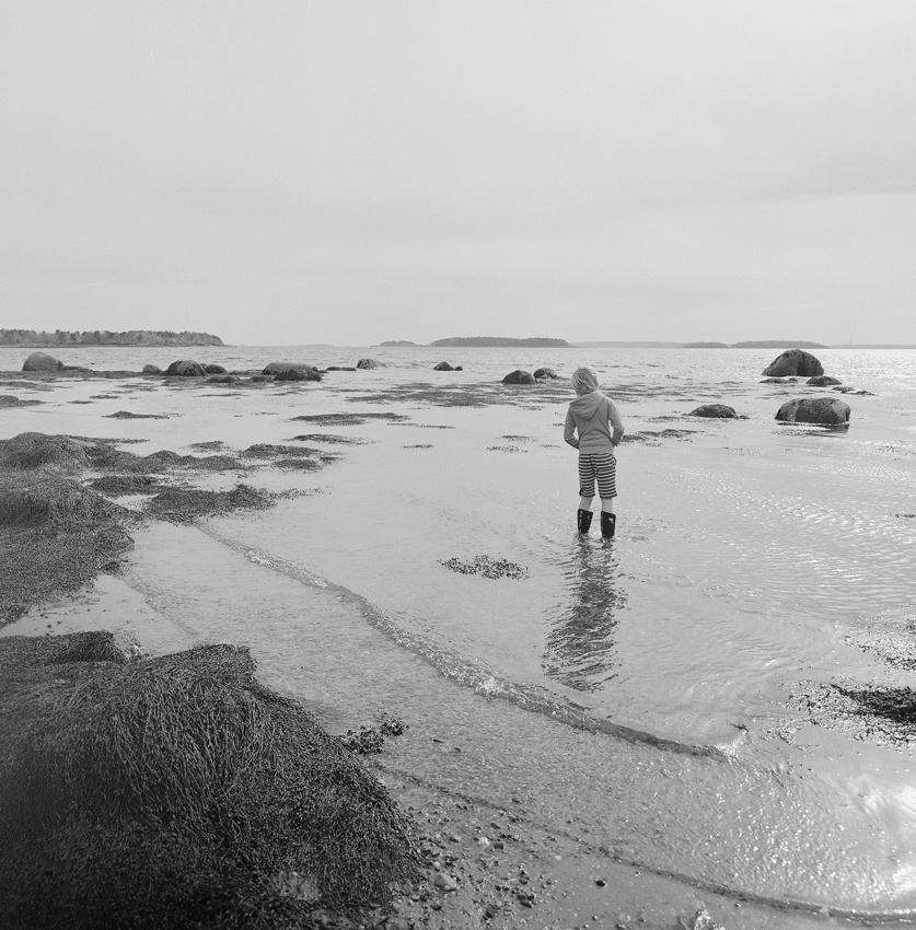 Silver Tide, Maine