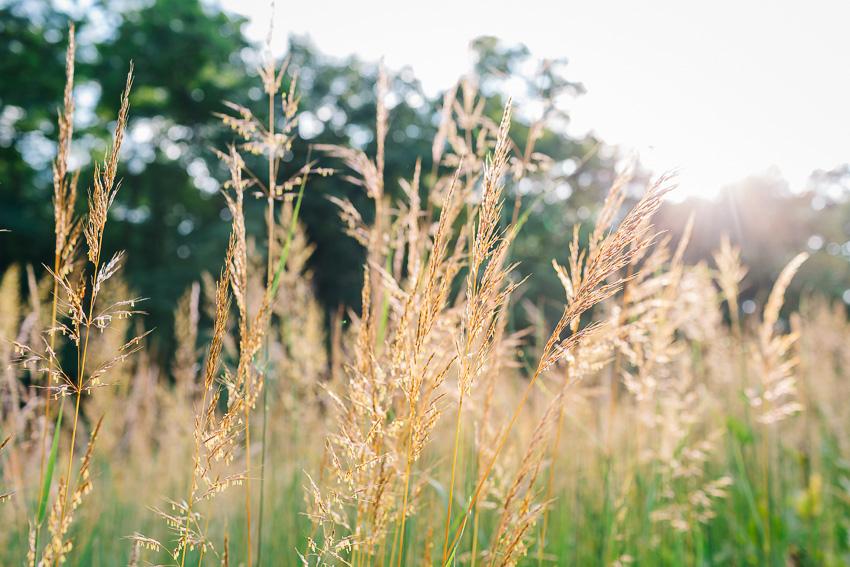 jenlucas_native_grasses_wi-1