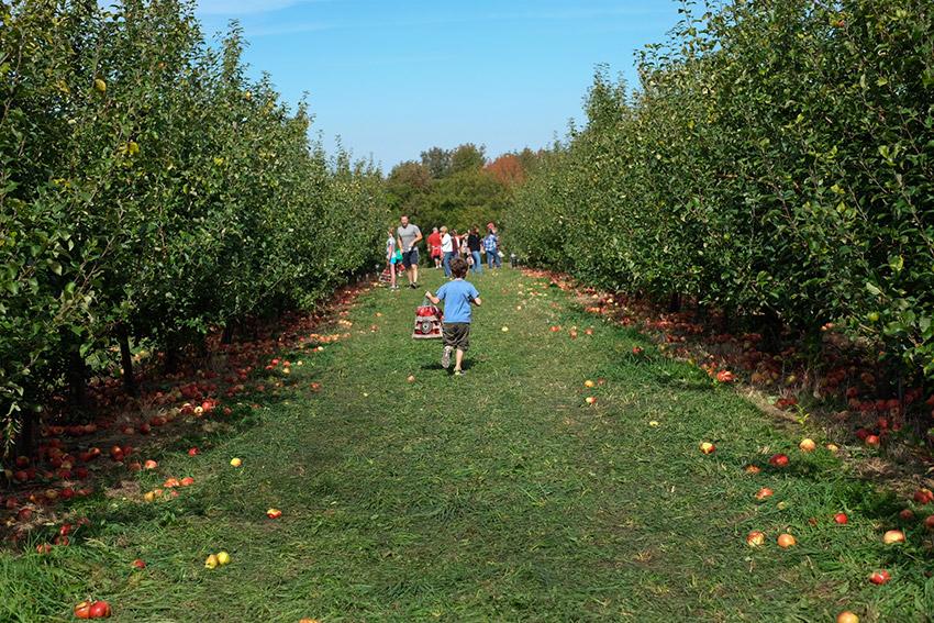 WYWH_karenporter_apples_galore_newyork_wk40_2015