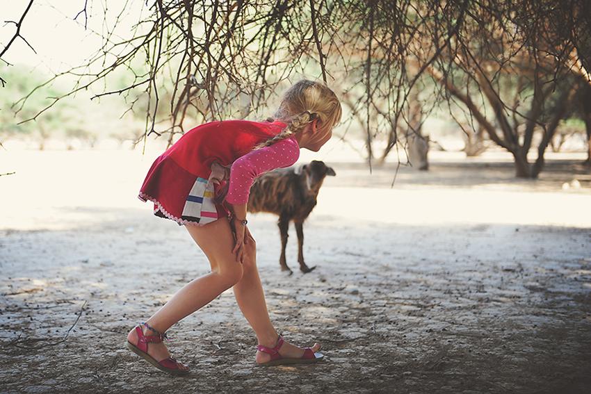 Kirsty Larmour Week 50_mountain goats_Mussandam_Oman