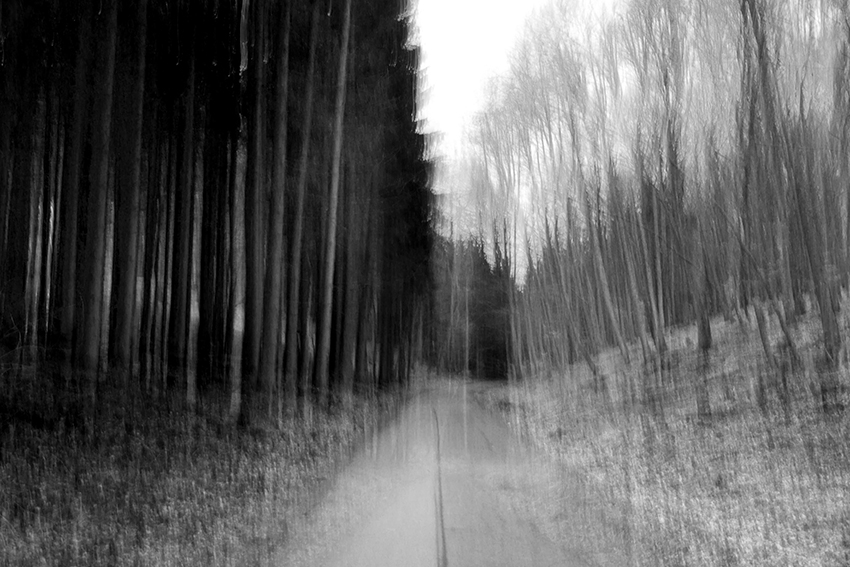 felicedouglas_a walk in the woods_Germany