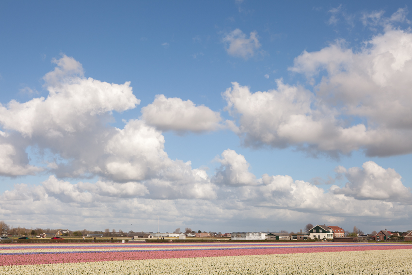 jaroszkristine15_bollenstreek_Holland