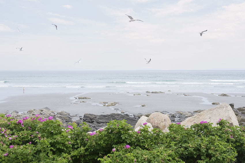 15_week26-pamelajoye-wild roses, seagulls, sea - long sands maine