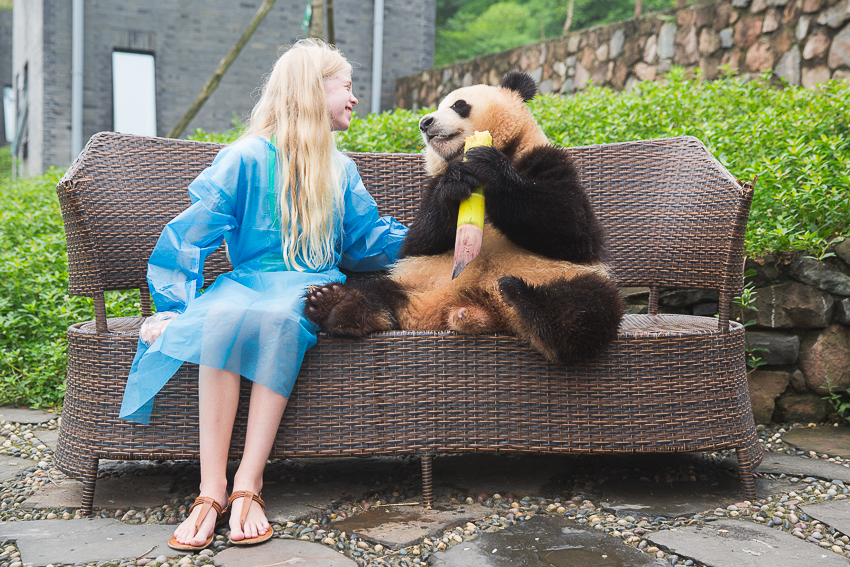 nicolaberry_Panda Love_Chengdu_China