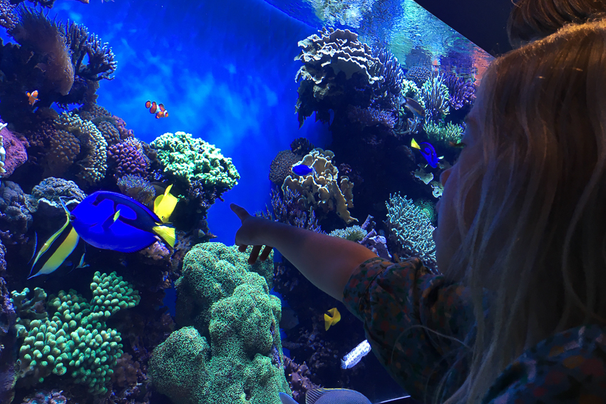 nicolaberry_Finding Dory_Monterey Bay Aquarium_California
