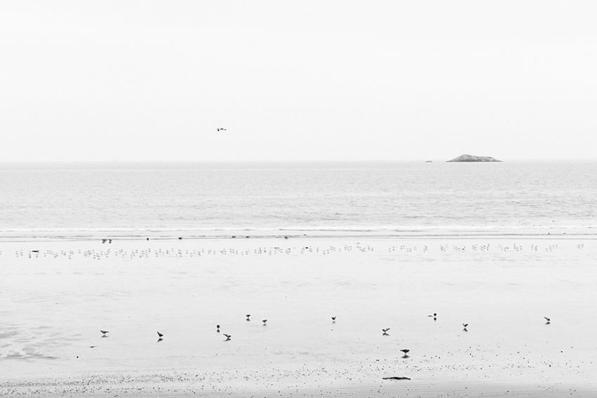 week40-pamelajoye-the-day-there-were-hundreds-of-birds-massachusettes