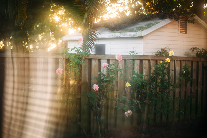 02-amanda-odonoughue-my-nanas-roses-week-51-fla