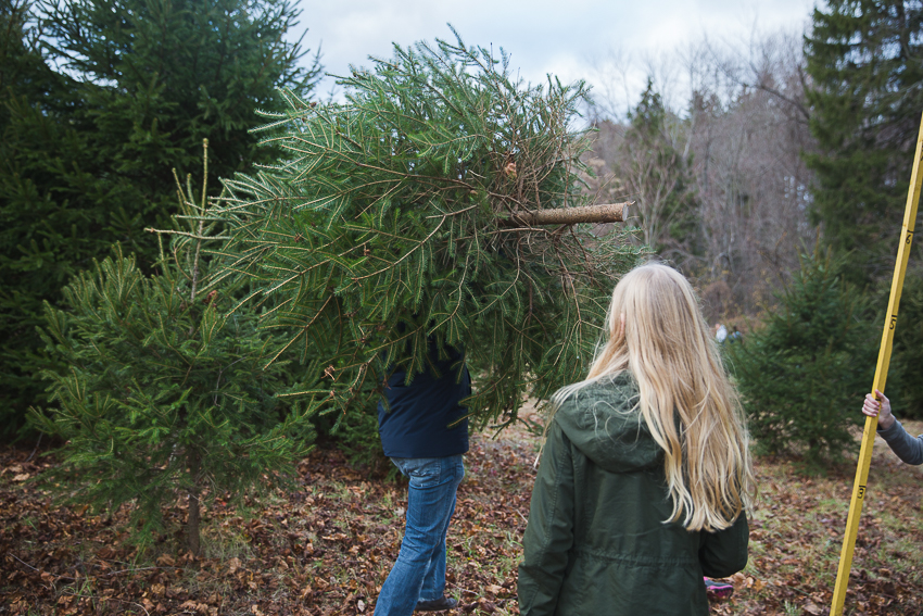 nicolaberry_first-tree-farm-tree-new-jersey
