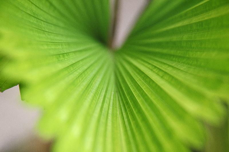 Rowe Timson_Our garden_Bali_