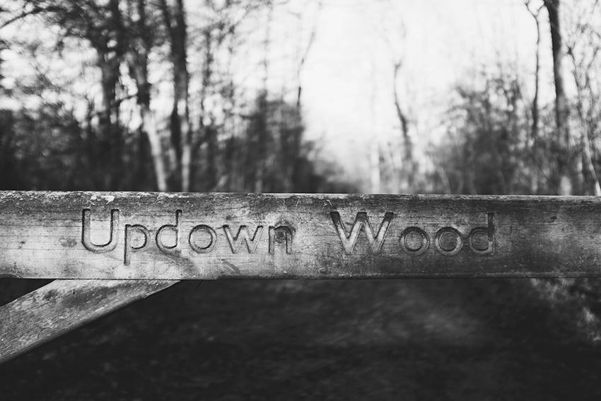 lili.love.updown.wood.surrey.hills.england