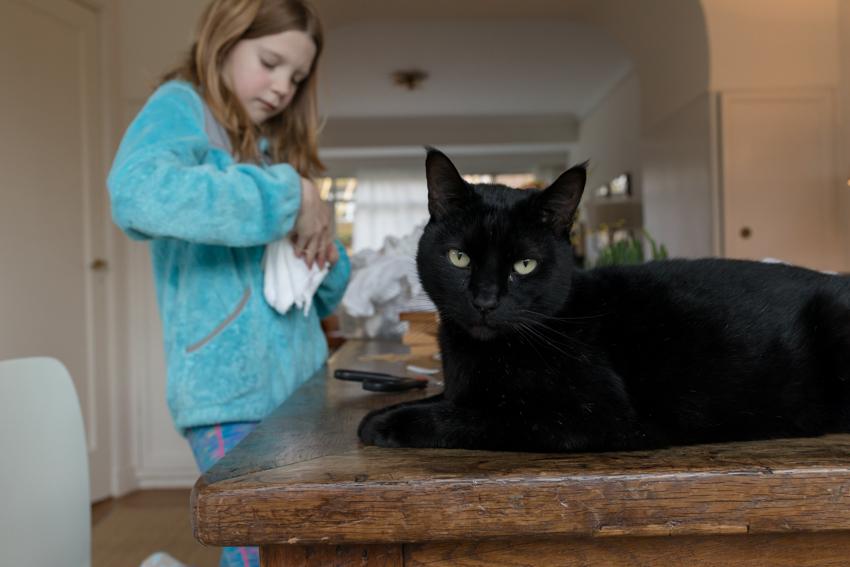 JaroszKristine5_The Neighbors Cat_The Netherlands