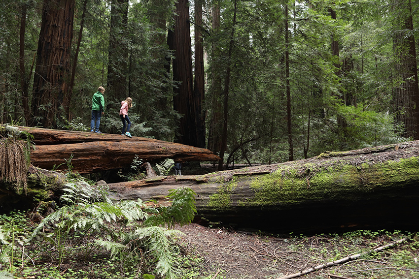 JaroszKristine_California Redwoods_california