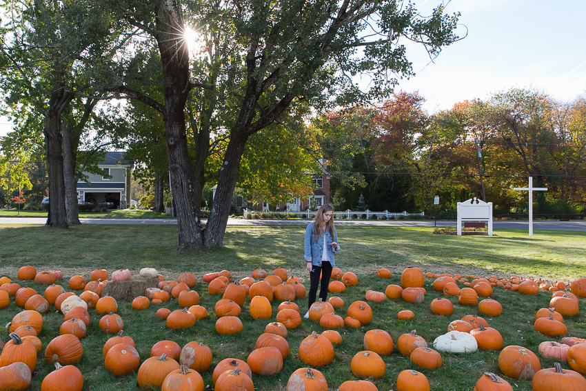 nicolaberry_Pumpkin Picking_New Jersey