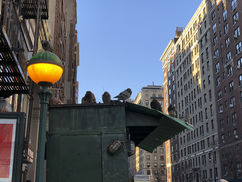 colleen_putman_city_birds_manhattan