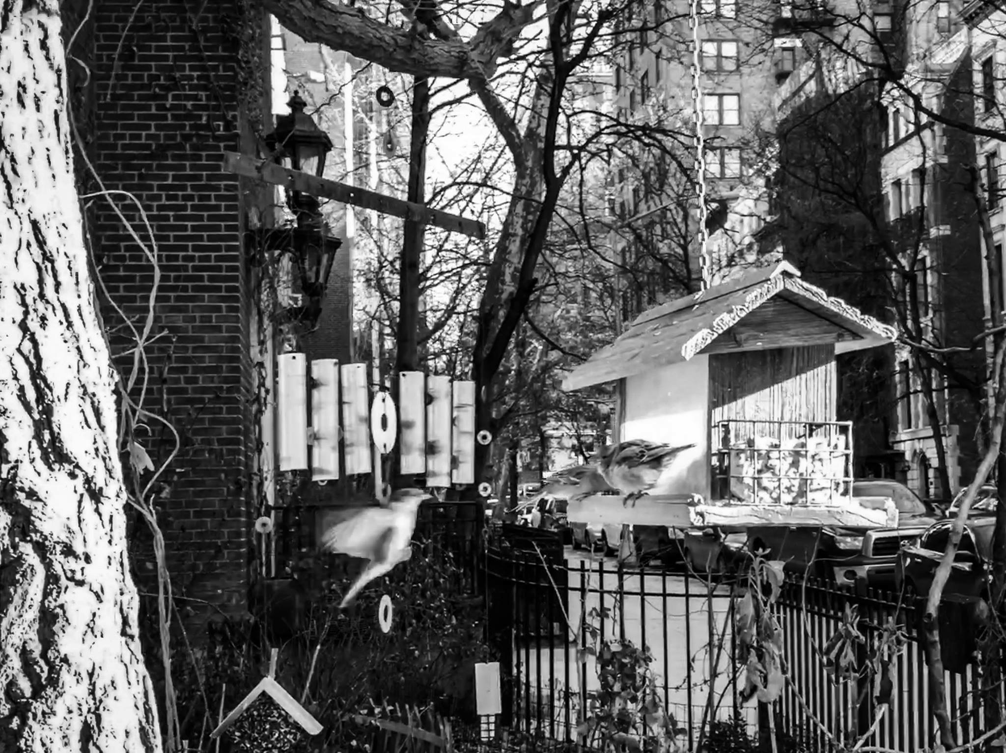 colleen_putman_neighborhood_bird_house_manhattan